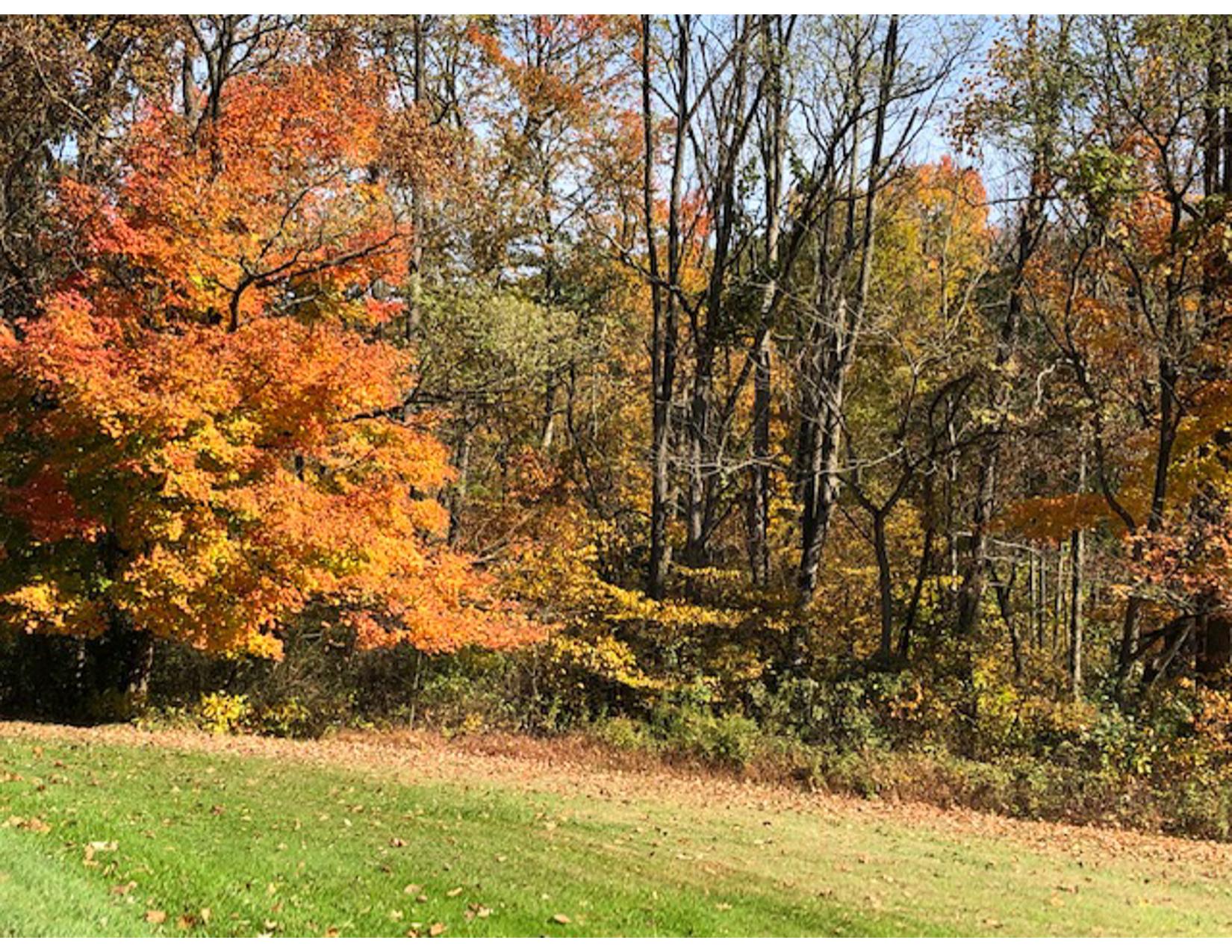 Fall-Foliage-B-02