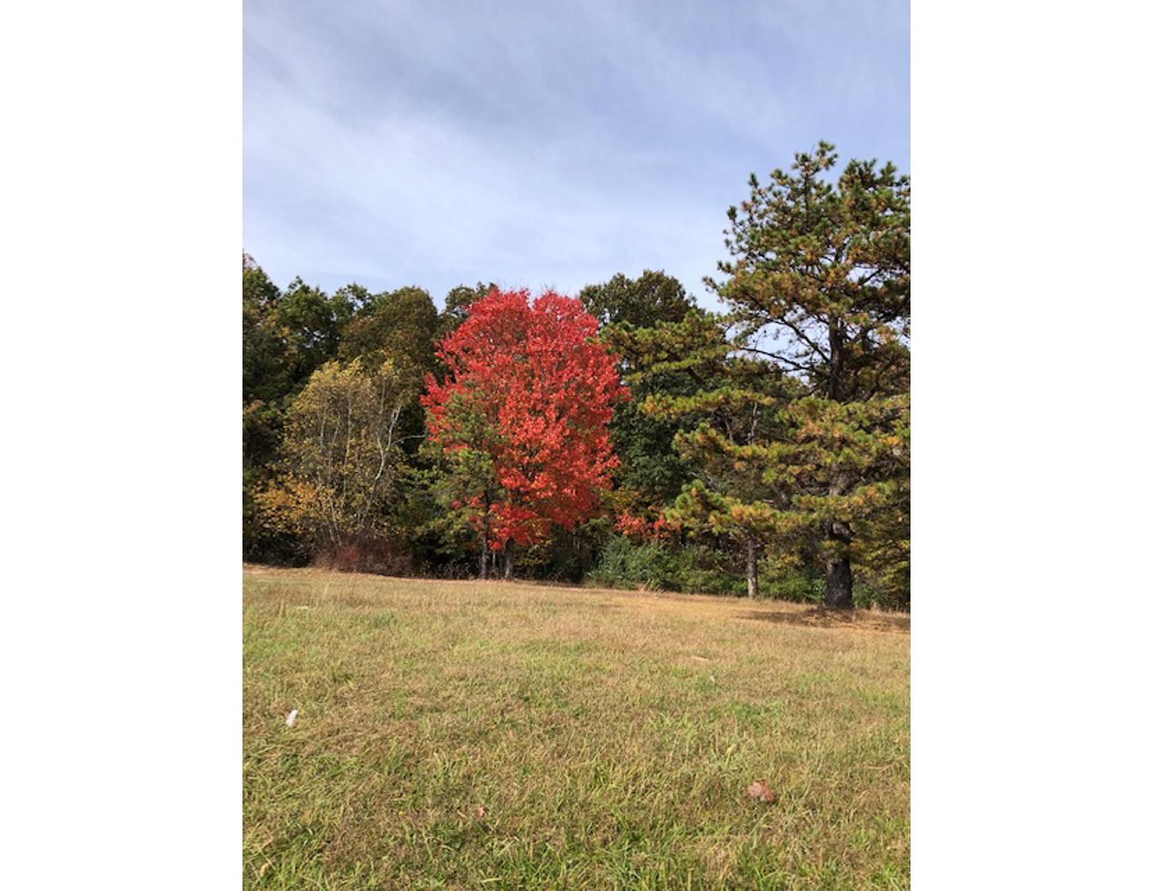 Fall-Foliage-B-06