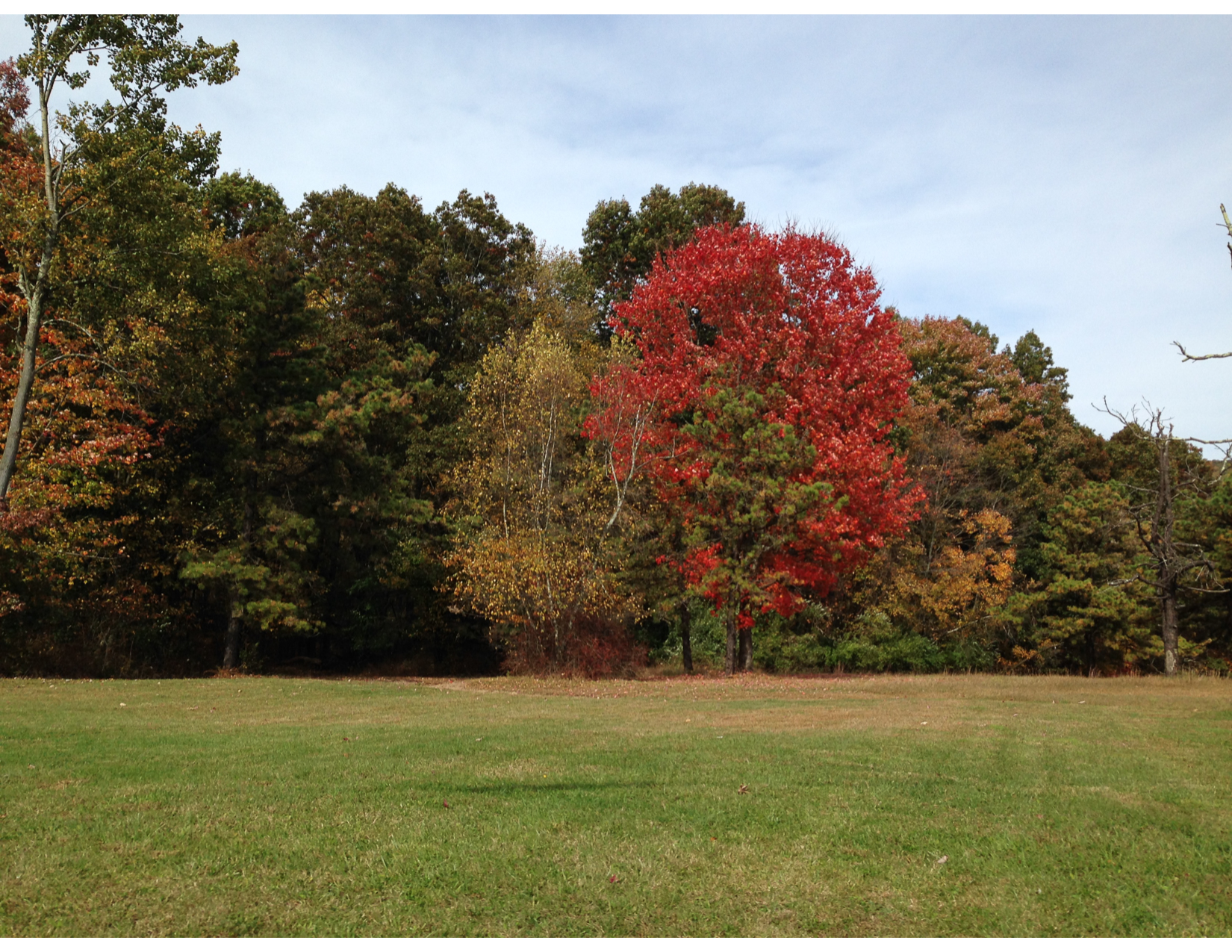 Fall Foliage Tour 3-01